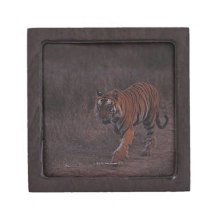 De Gangen van de tijger langs Sleep Premium Juwelen Doos