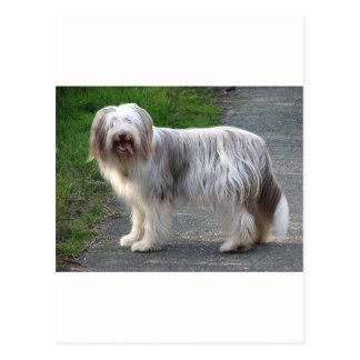 De gebaarde Hond van de Collie Briefkaart