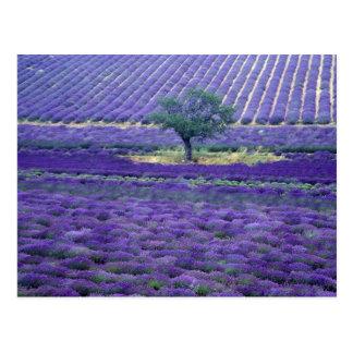 De gebieden van de lavendel, Vence, de Provence, Briefkaart