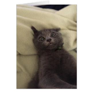 De gekke Leuke Lege Kaart van de Kat