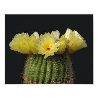 De gele Bloem van de Cactus Foto Afdruk