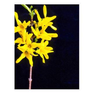 De gele bloemen van het Takje van de Forsythia Briefkaart