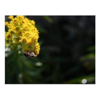De gele Fotografie van de Natuur van de Hommel van Briefkaart