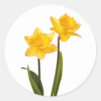 De gele Gele narcissen van de Lente op Wit Ronde Stickers