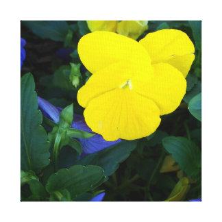 De gele Lente van het Viooltje bloeit het BloemenA Canvas Print