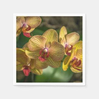 De gele orchideeën sluiten omhoog papieren servetten
