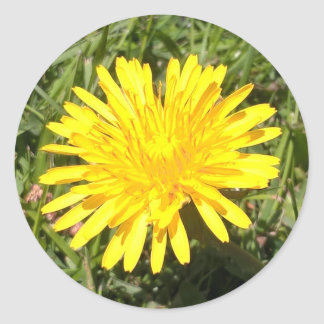 De gele sticker van de de natuurfoto van de