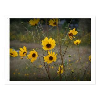 De gele zwarte Foto van Florida Wildflower Briefkaart
