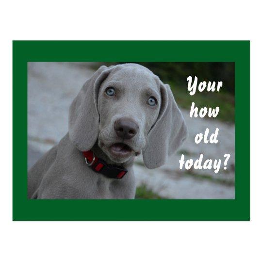 De Gelukkige Humor Van De Hond Van De Verjaardag Briefkaart