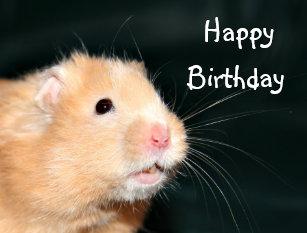 Hamster Verjaardag Cadeaus Zazzle Nl