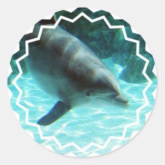 De gemeenschappelijke Stickers van de Dolfijn