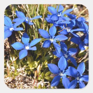 De Gentiaan van de lente in de Franse Alpen Vierkante Sticker