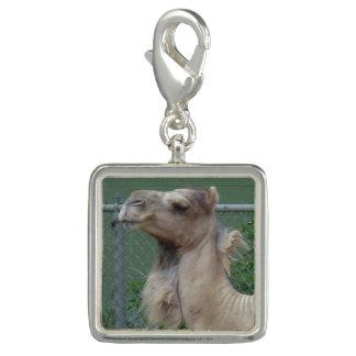 De Geplateerde Charme van de kameel Zilver Charms
