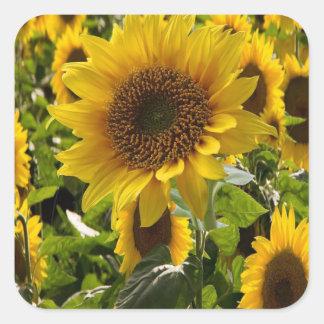 De gift doet Zonnebloemen in zakken Vierkante Sticker
