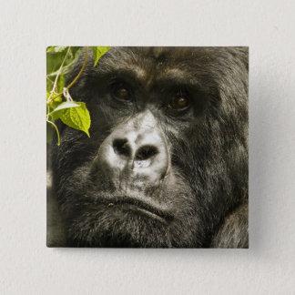 De Gorilla van de berg, beringeiberingei van de Vierkante Button 5,1 Cm