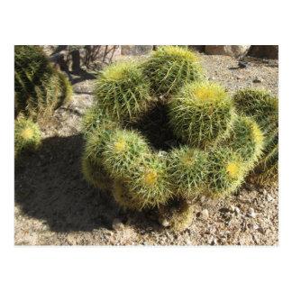 De gouden Cactus van het Vat Briefkaart