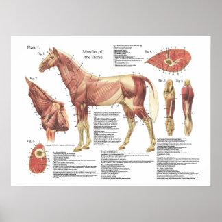 De Grafiek van de Anatomie van de Schouder van de Poster