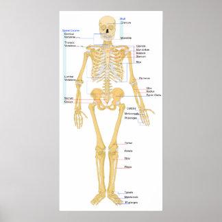 De Grafiek van het skelet Poster