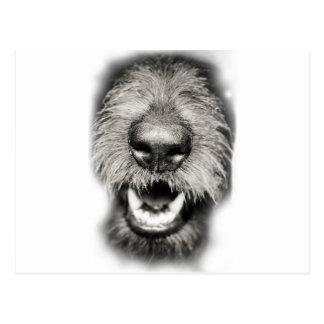 De Grappige Glimlach van het Gezicht van de hond Briefkaart