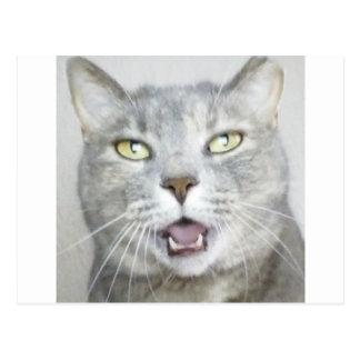 de grappige grijze miauw van de katten pluizige briefkaart