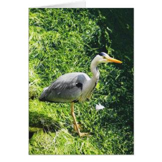 De grijze Britse Vogels van de Reiger - warkworth Wenskaart