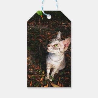 De grijze Kat van de Gestreepte kat Cadeaulabel