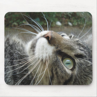 De grijze Kat van de Wasbeer van Maine Muismatten
