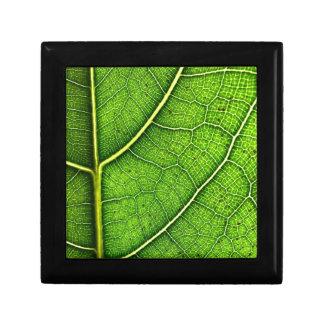 De groene Doos van LeafJewellery/van de Gift Decoratiedoosje