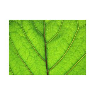 De groene Macro van het Blad Canvas Print