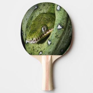 De groene smaragdgroene boa van de boomslang in tafeltennis bat