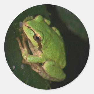 De groene Sticker van de Kikker van de Boom