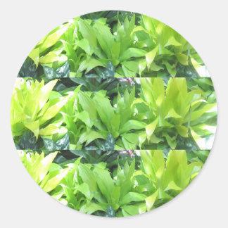 De groene Tuin van de Bloem: De elegante Bloesem v Ronde Sticker