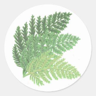 De Groene Varens van het mos Ronde Sticker