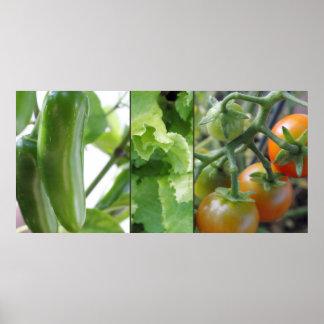 De groenten van de tuin - tomaten, sla, jalapeno poster