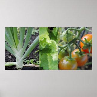 De groententomaten van de tuin, sla, uiposter afdruk