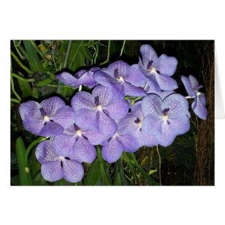 De Groeten van de orchidee Briefkaarten 0