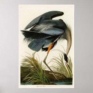 De grote Blauwe Reiger John Audubon Birds van Poster