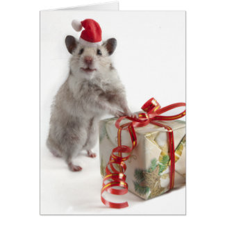 De Hamster van de Kerstman met Gift Briefkaarten 0