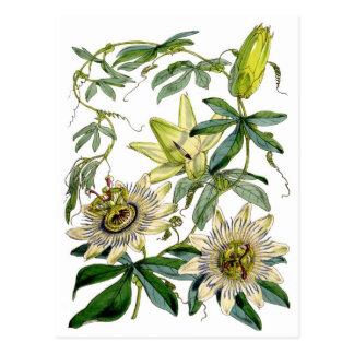 De hartstocht bloeit Botanische Illustratie Briefkaart
