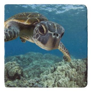 De Hawaiiaanse Groene Schildpad van het Zee Trivet
