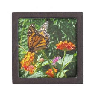 De heldere Dierlijke Natuur van de Oranje Vlinder Premium Bewaar Doosje