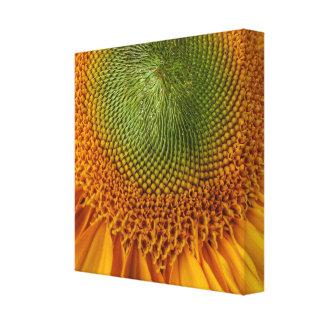 De heldere druk van het zonnebloemcanvas canvas afdrukken