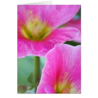De heldere Roze Kaart van Stokrozen