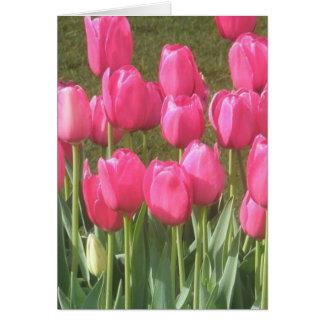 De heldere Roze Tuin van de Tulp Briefkaarten 0