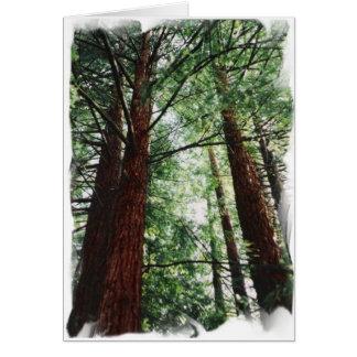 De Hemel van de Californische sequoia Briefkaarten 0