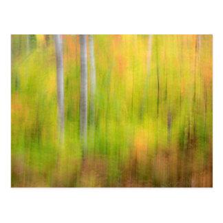 De herfst Bos   Michigan, Hoger Schiereiland Briefkaart
