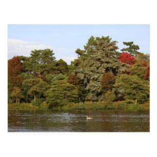 De herfst, het Meer van het Park Roath, Cardiff Briefkaart