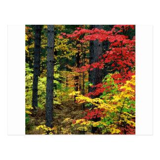 De herfst Michigan Briefkaart