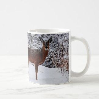 De Herten van Whitetail in de Mok van de Koffie