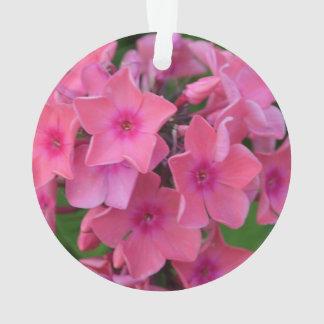 De hete Roze Bloemen van de Flox Ornament
